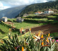 Madeira for self catering holiday apartments